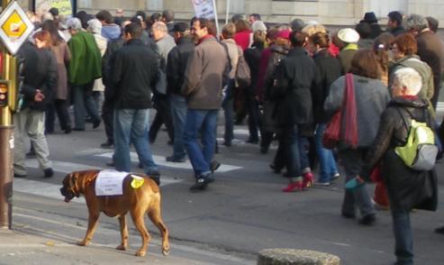 """chien boxer Force ouvrière FO"""" à la manifestation de Dijon contre la réforme des retraites"""